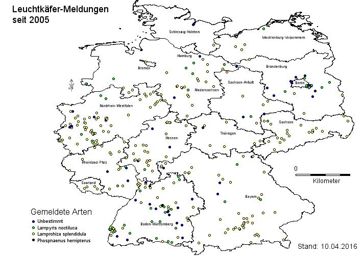 Glühwürmchen Deutschland Vorkommen